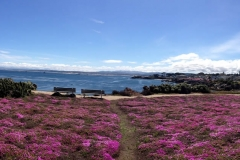pacific-grove-bloom