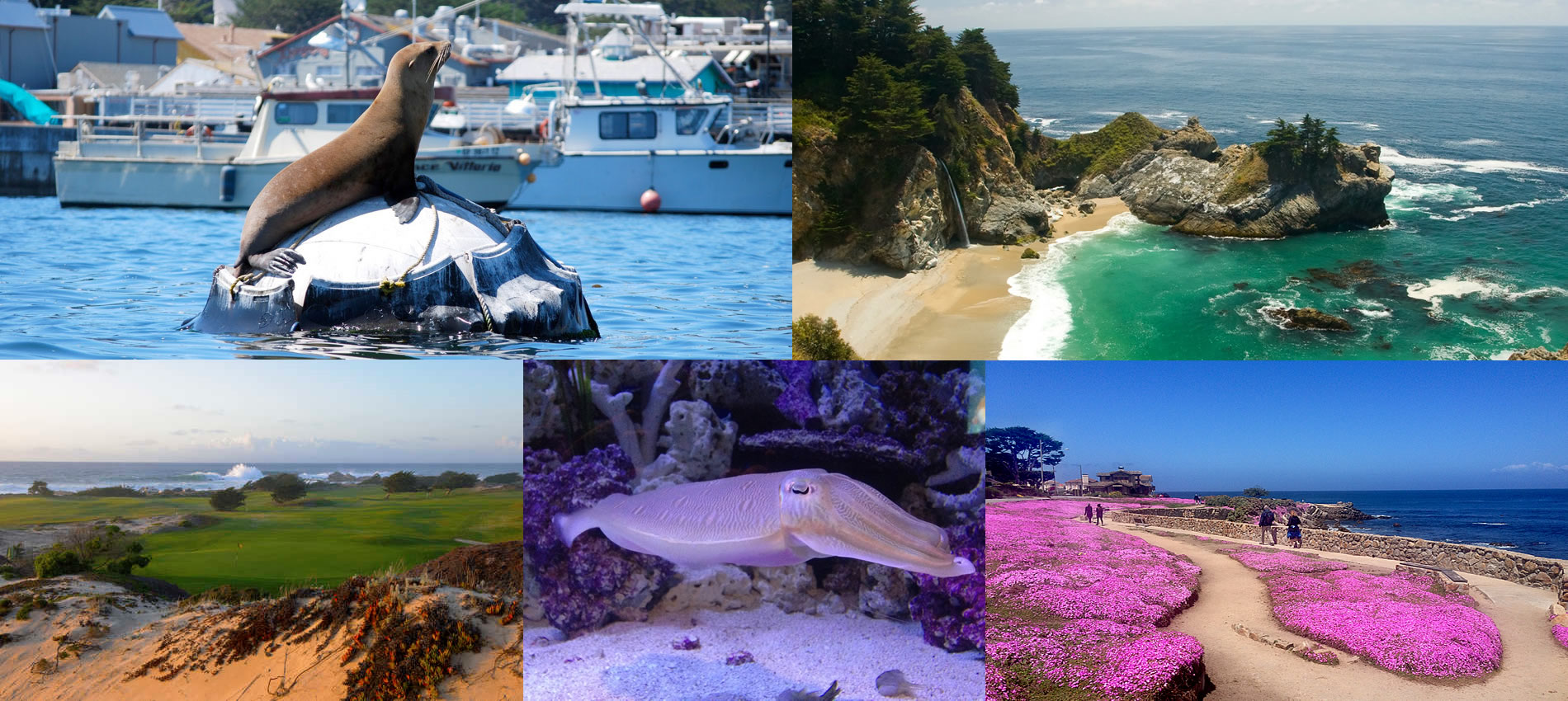 things to do on the monterey peninsula